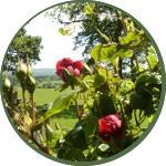 rosesround