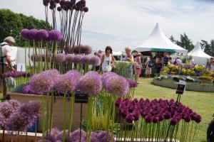 Alliums at RHS Tatton Show