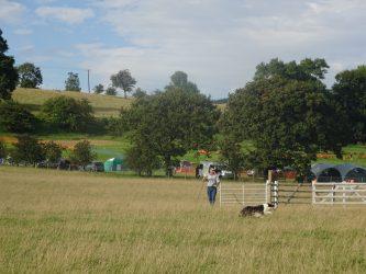 Shepherd and sheep dog